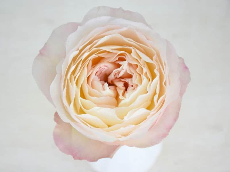 Flower Wholesaler Parfum Flower Company