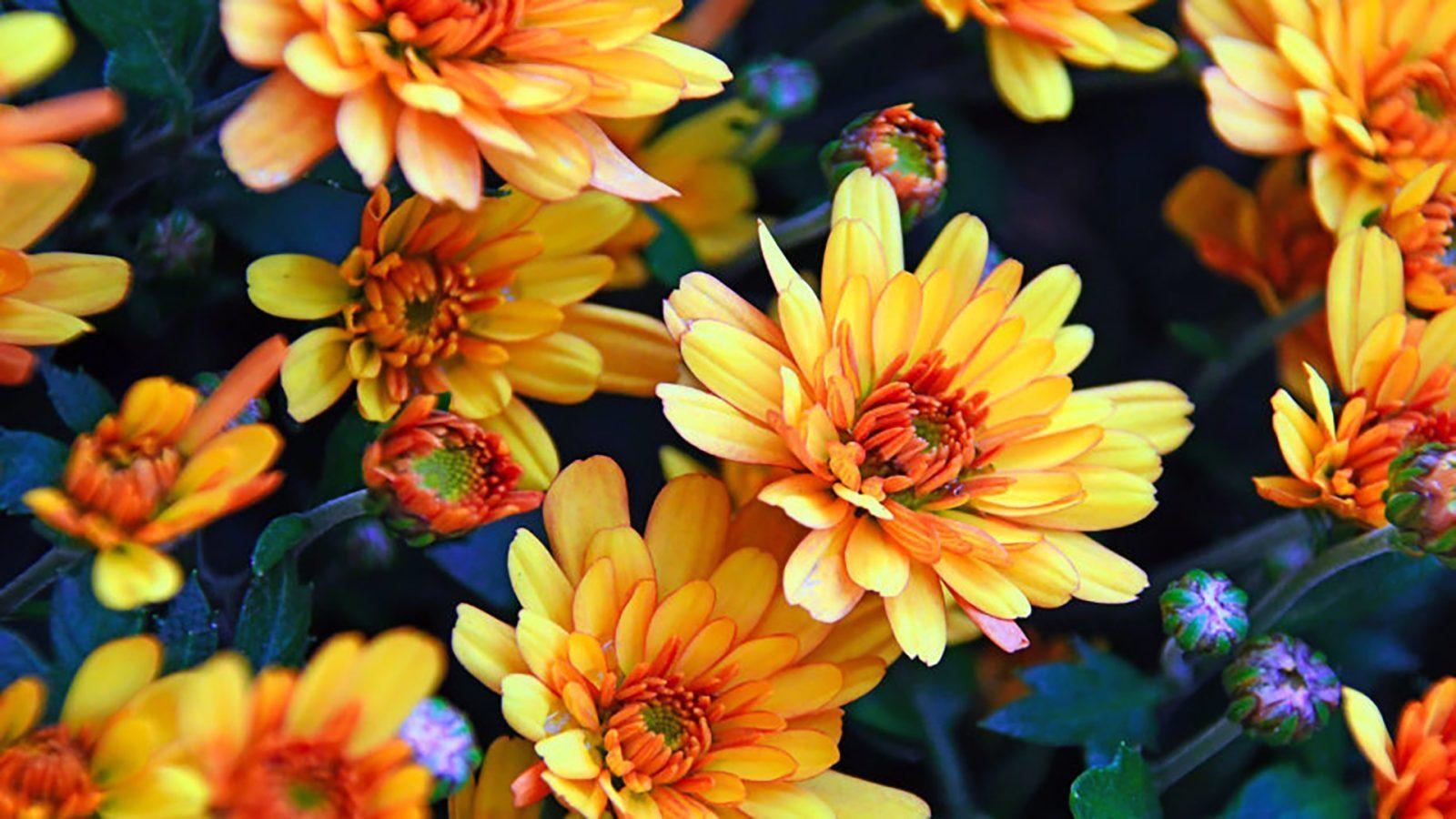 Flowers 4k Wallpapers For Desktop Mobiles